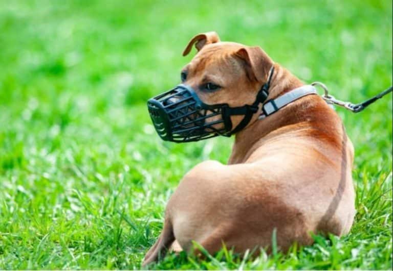 Top 10 Best Dog Muzzles Reviews