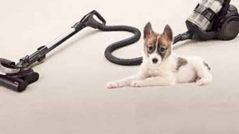 Vacuum For Pet Hair – Buying Guide