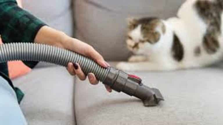 Cordless Vacuum For Pet Hair – Buying Guide